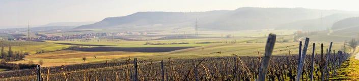 Opinião da paisagem do vinhedo do panorama Imagem de Stock