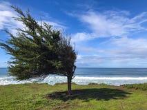 Opinião da paisagem da natureza, os sopros do vento para dobrar a árvore com o oceano no fundo imagem de stock