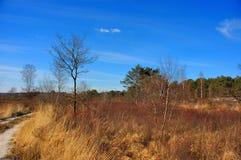 Opinião da paisagem, prado. imagens de stock royalty free