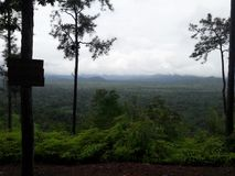 Opinião da selva Fotografia de Stock