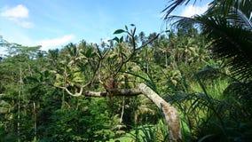 Opinião da selva Foto de Stock