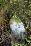Opinião da vegetação dos marismas Fotos de Stock Royalty Free