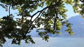Opinião das folhas e do lago do verde Fotos de Stock
