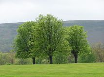 Opinião de árvore Imagens de Stock Royalty Free