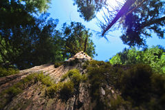 Opinião de árvore Foto de Stock Royalty Free