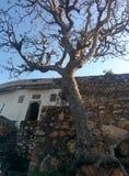 Opinião de árvore fotografia de stock royalty free