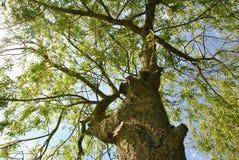 Opinião de árvore Fotografia de Stock