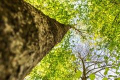 Opinião de árvore bonita da parte inferior à parte superior imagem de stock