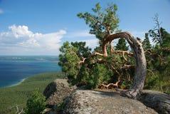 Opinião de árvore do arco Fotografia de Stock Royalty Free