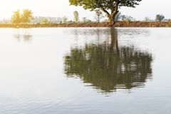 Opinião de árvore na reflexão da água Fotos de Stock Royalty Free