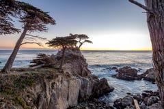 Opinião de árvore solitária de Cypress no por do sol ao longo da movimentação famosa de 17 milhas - Monterey, Califórnia, EUA Imagem de Stock