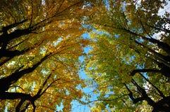 Opinião de árvores ascendente fotografia de stock