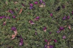 Opinião de ângulo alto Autumn Dry Leaves fotografia de stock