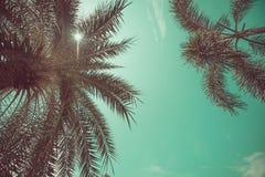 Opinião de ângulo das palmeiras foto de stock