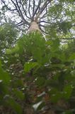 A opinião de ângulo de Uprisen das folhas e da árvore Fotografia de Stock Royalty Free
