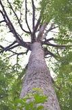 A opinião de ângulo de Uprisen das folhas e da árvore Imagem de Stock Royalty Free