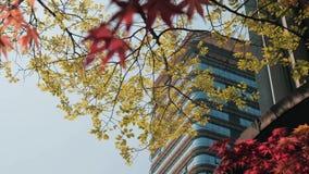 Opinião de baixo ângulo de construções do negócio do escritório com ramos de árvore Distrito financeiro filme
