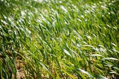Opinião de campo de exploração agrícola imagens de stock