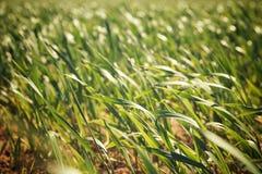 Opinião de campo de exploração agrícola foto de stock royalty free