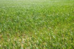 Opinião de campo de exploração agrícola foto de stock
