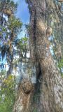 Opinião de Cypress Imagens de Stock Royalty Free