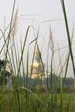 A opinião de grama verde na manhã é vista tão calma Imagens de Stock