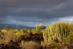 A opini?o de luzes de rua com as v?rias plantas ajardina, spurge canaty da ilha, Tenerife, Ilhas Can?rias, Espanha - imagem imagem de stock royalty free