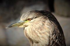 Opinião de olho de pássaros Foto de Stock Royalty Free