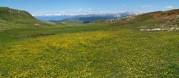 Opinião de Panoramaic do prado e de flores verdes bonitos no cume nas montanhas Imagem de Stock