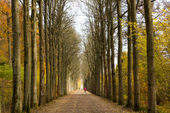 Opinião de perspectiva das árvores Imagens de Stock Royalty Free