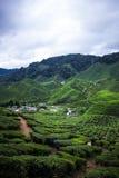 Opinião de plantação de chá em Cameron Highlands, Malásia fotos de stock