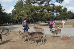 Opinião de Stree em Nara Japan Imagens de Stock Royalty Free