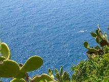 Opinião de superfície elevado de Cinque Terre Mediterranean Sea com os cactos do Opuntia no primeiro plano fotos de stock