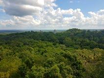 Opinião de Tikal imagens de stock royalty free