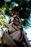 Opinião de tronco de palmeira de baixo de imagem de stock