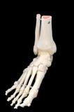 Opinião dianteira de lado esquerdo do esqueleto do pé foto de stock