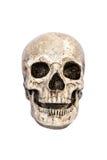 Opinião dianteira isolada do crânio Imagem de Stock Royalty Free