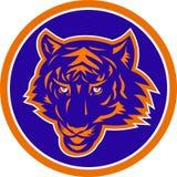 Opinião dianteira principal do tigre Imagem de Stock Royalty Free