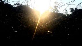 Opinião do amanhecer Foto de Stock