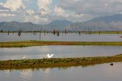 Opinião do amanhecer sobre Uda Walawe Lake, Sri Lanka Imagens de Stock Royalty Free