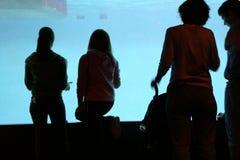 Opinião do aquário Foto de Stock Royalty Free