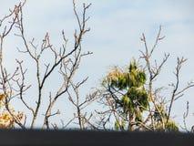 Opinião do balcão de árvores verdes contra o céu azul Fotos de Stock Royalty Free