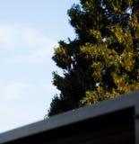 Opinião do balcão de uma árvore Fotos de Stock Royalty Free
