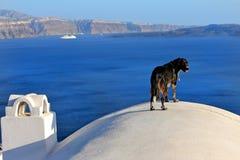 Opinião do cão de Santorini fotos de stock royalty free
