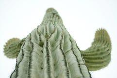 Opinião do cacto do Saguaro Fotografia de Stock