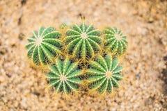 Opinião do cacto verde como um fundo, vista superior do close up, textura imagem de stock