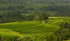 Opinião do campo do arroz em Jatiluwih Foto de Stock