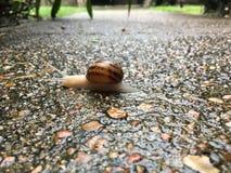 Opinião do caracol Foto de Stock