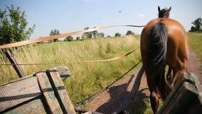 Opinião do carro do cavalo à estrada da vila adiante video estoque