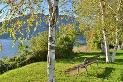 Opinião do close-up às árvores de vidoeiro branco e a um banco nas proximidades do lago de Garlate em um dia ensolarado do outono imagens de stock royalty free